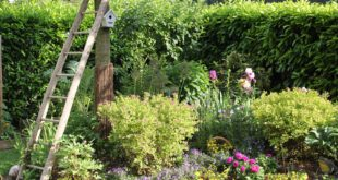 własny ogródek