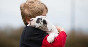 łagodne rasy psów