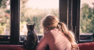 kot dla dziecka