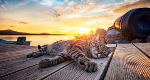ochrona zwierząt przed przegrzaniem