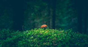 grzyb na polanie