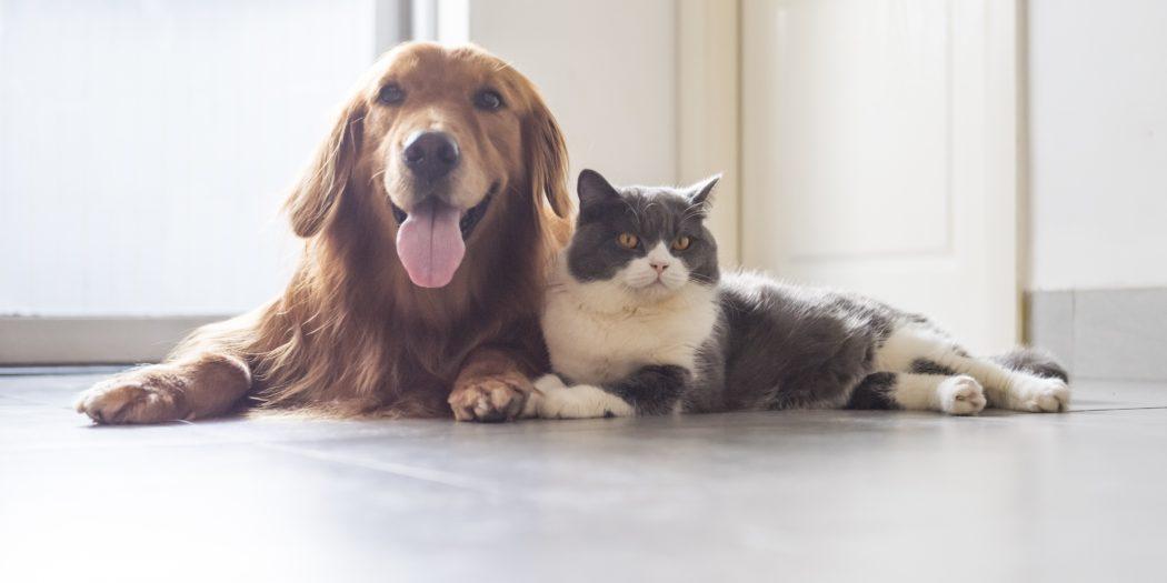 pies i kot na jednym posłaniu