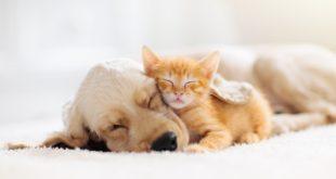 kot i pies śpiące razem