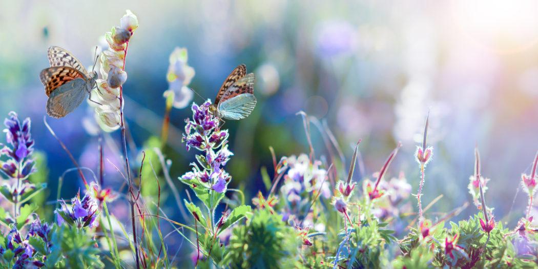 dzikie kwiaty na łące i motyl
