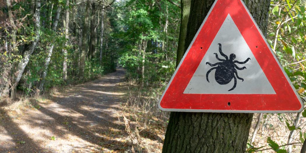 znak ostrzegający przed kleszczami