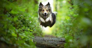 szczęśliwy skaczący pies