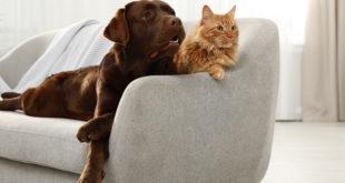 pies i kot na kanapie
