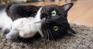 kot maskotka mysz kocimiętka
