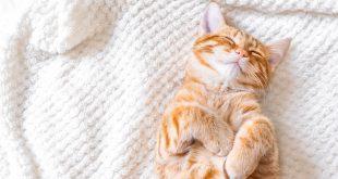 zrelaksowany kot