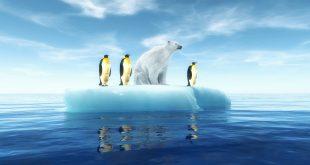 pingwiny i niedźwiedź polarny na krze lodowej